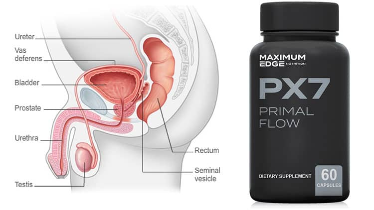 PX7 Primal Flow Review