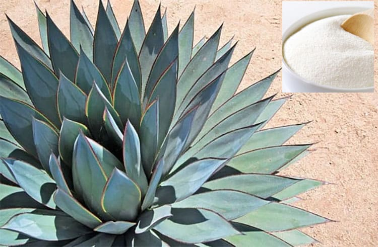 Blue Agave Inulin