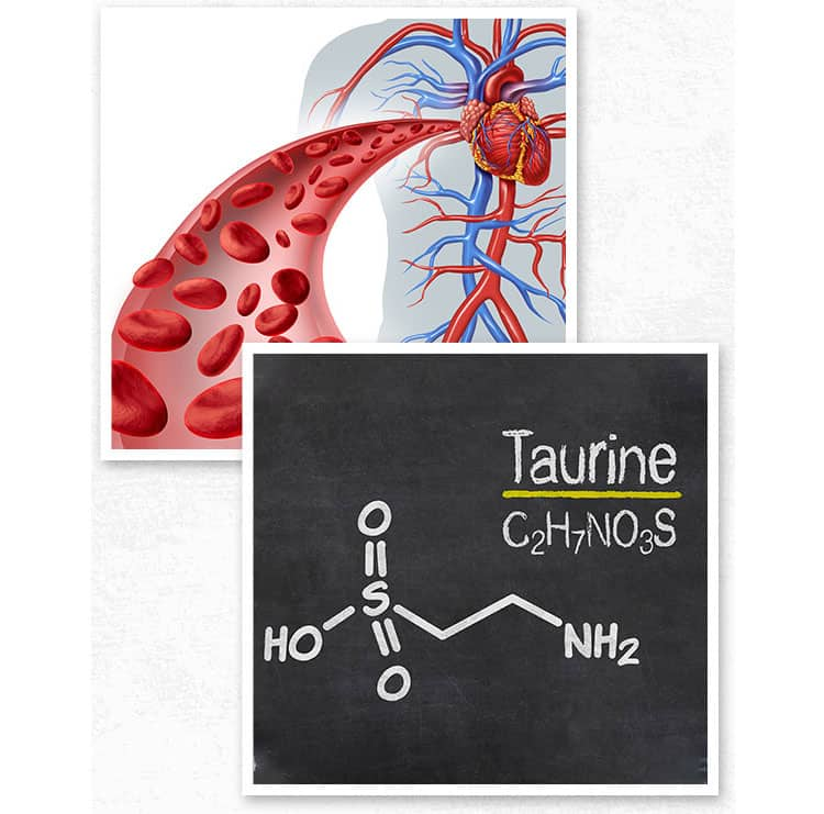 L-Taurine-can-increase-blood-flow-to-protect-your-precious-neurovascular-system-circulation-and-blood-vessel-health