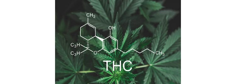Does CBD Oil Work Without THC