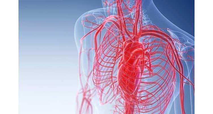 CircuBoost Improves blood flow